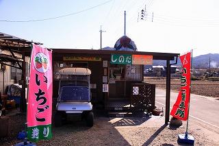 0224ichigo02.jpg