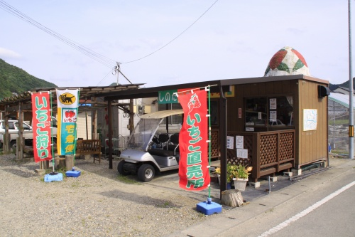 15shinoda02.jpg