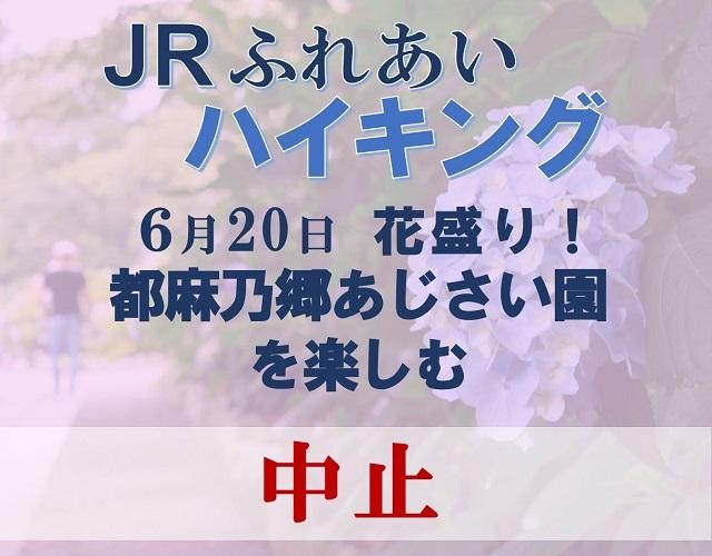 【中止】6月20日(日)JRふれあいハイキング 花盛り!都麻乃郷あじさい園を訪ねて