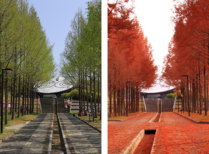 日本へそ公園の「メタセコイアの並木道」