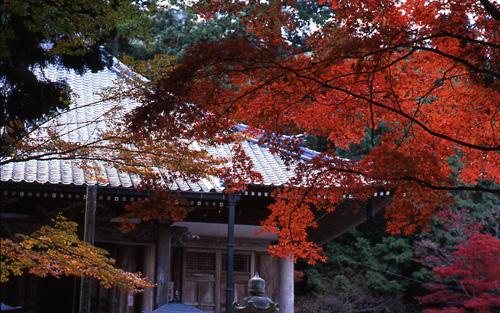 西林寺境内にある「都麻の郷あじさい園」