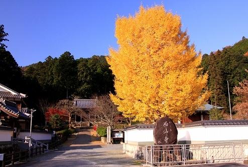 saisenji03.jpg