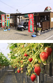 篠田いちご園